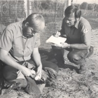Banding birds - National Wild Life -Men unknown - from the Seymour Tribune, bw 9.52x7.43