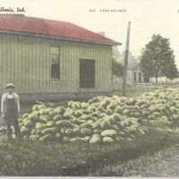 Melons at Vallonia - from Garvin Jennings