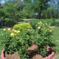 SICA Rose Garden dh.jpg