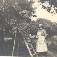 Grandma Crabb picking peaches