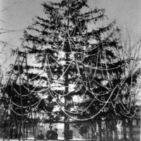 Decorated tree, only municipal tree, party of December 22, year unknown.  Appears to be Seymour street. - from Elaine Allman,  bw 4.03 x 5.81